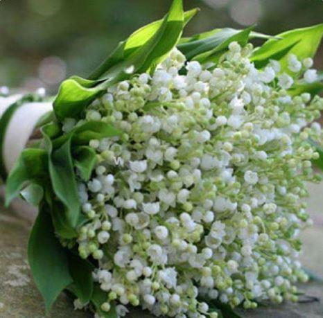 Поздравляем дорогих женщин с 8 Марта и праздником Весны!